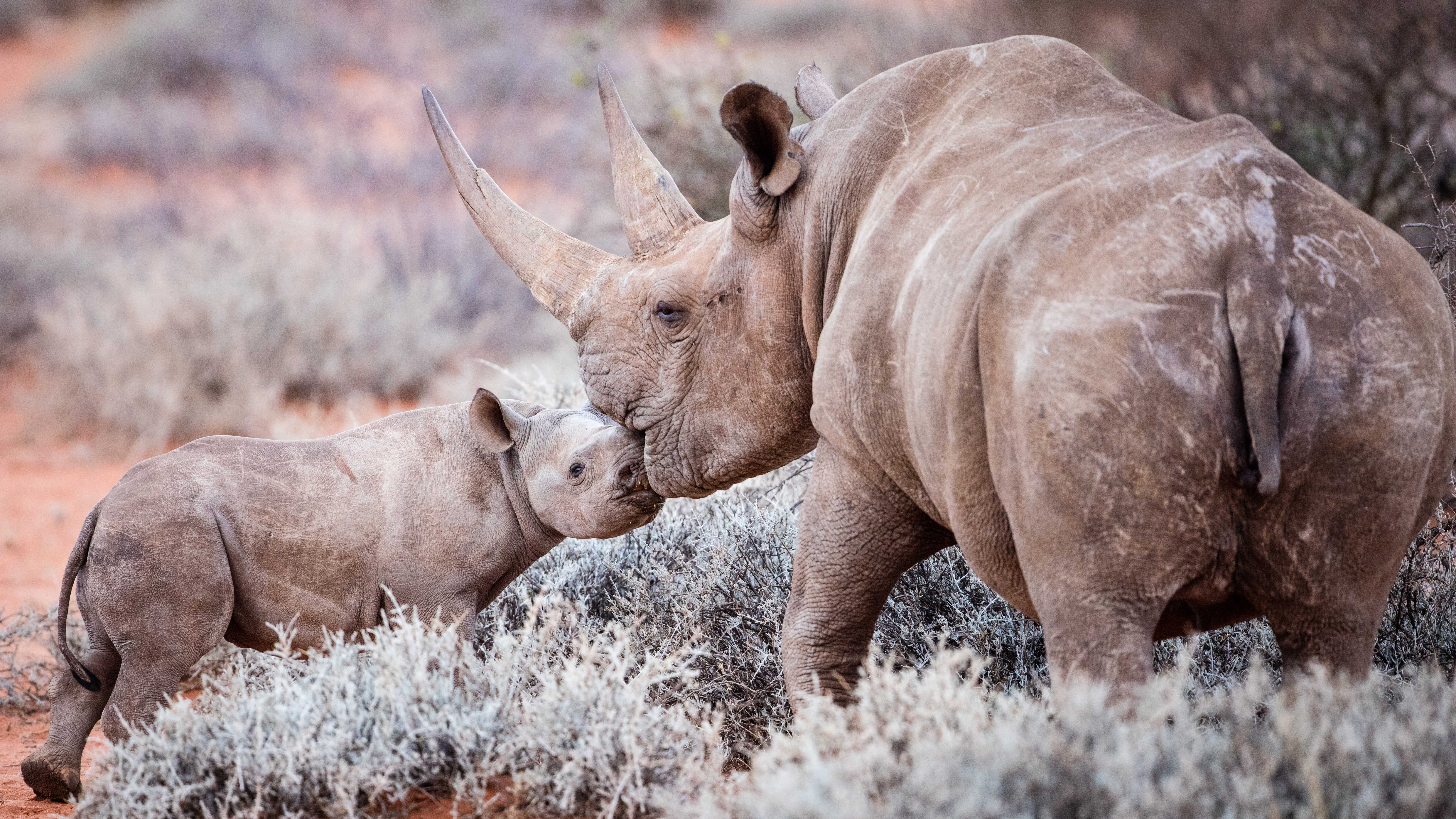 How to Protect Endangered Rhinos on Your Next Safari | Blog