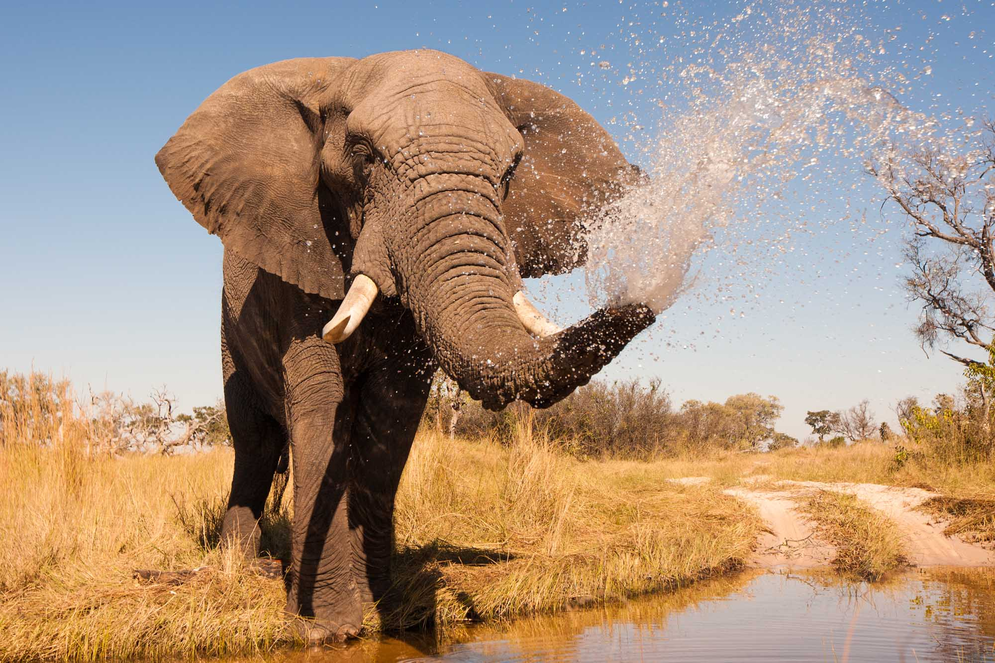 What to Expect on an African Safari: Part II | Blog | Zicasso
