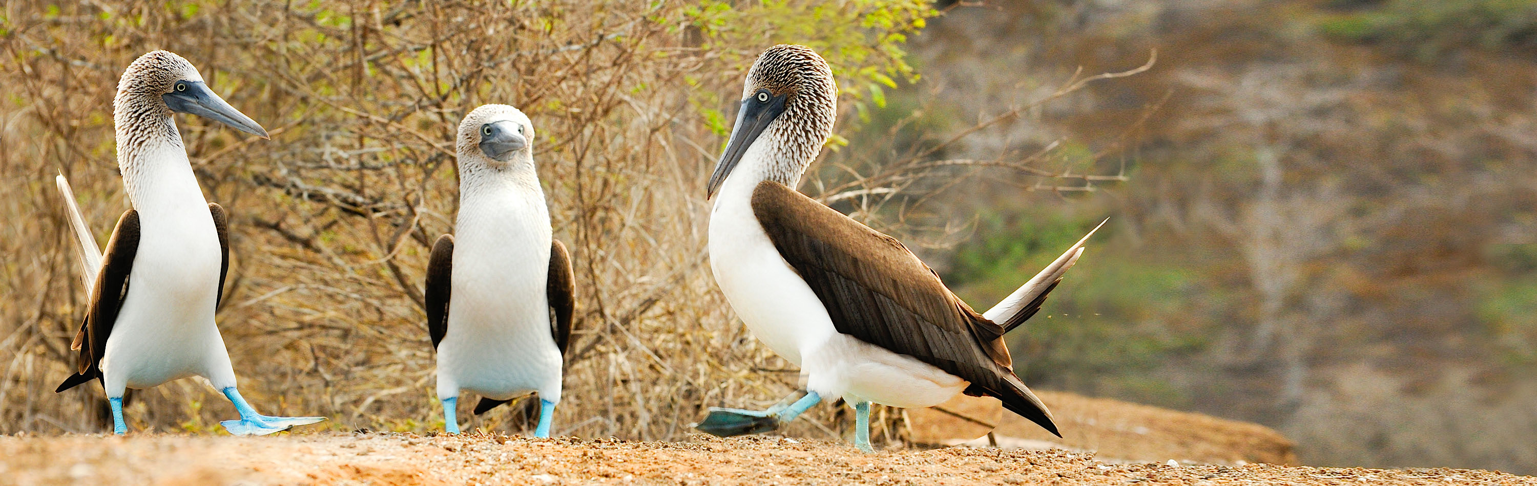 Best Galapagos Islands Vacations Tours 2020 2021