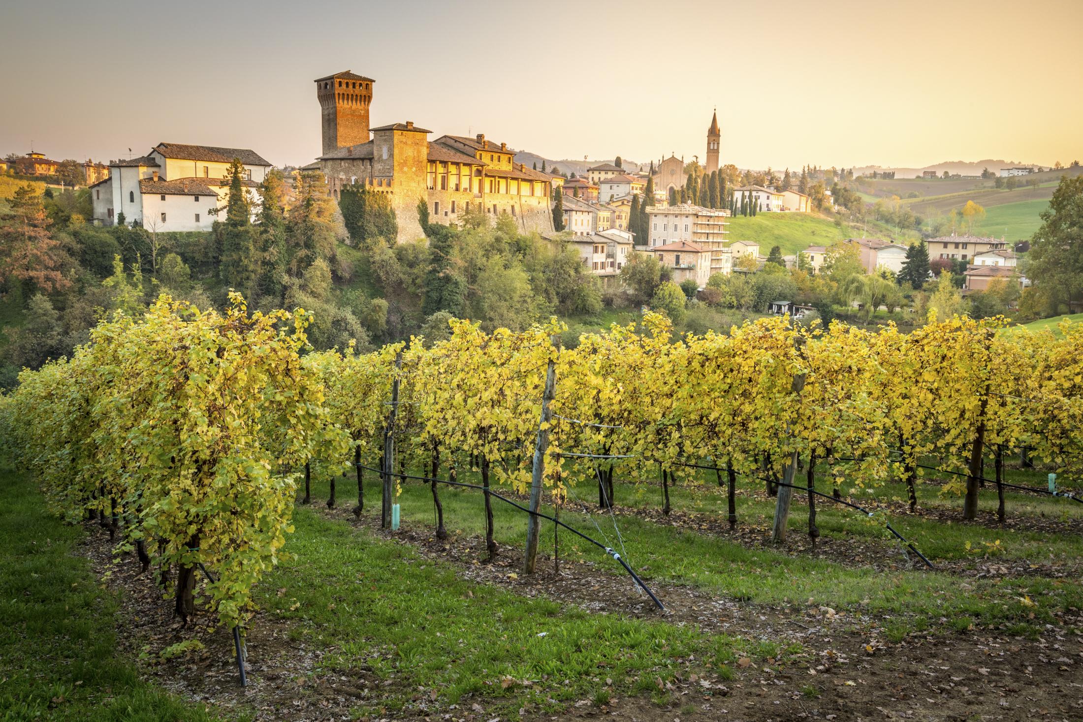 Vineyard in Levizzano Rangone, Modena, Emilia-Romagna.