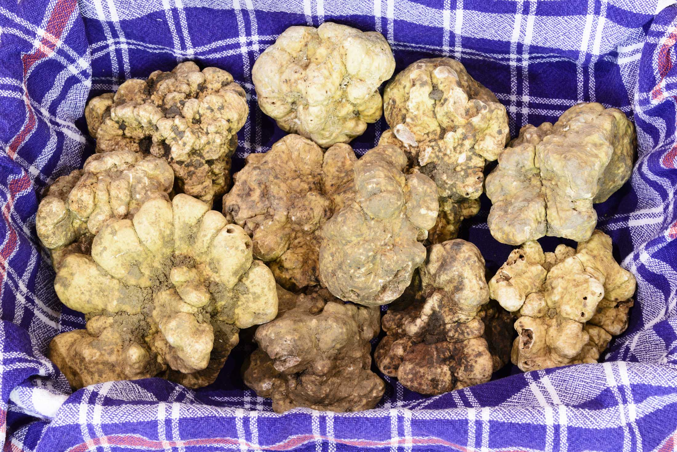 White truffles from Piedmont, Italy