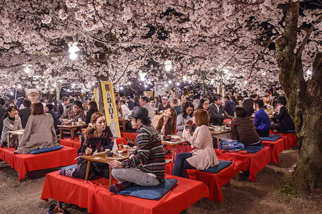 Japan-kyoto-spring-cherry-blossoms