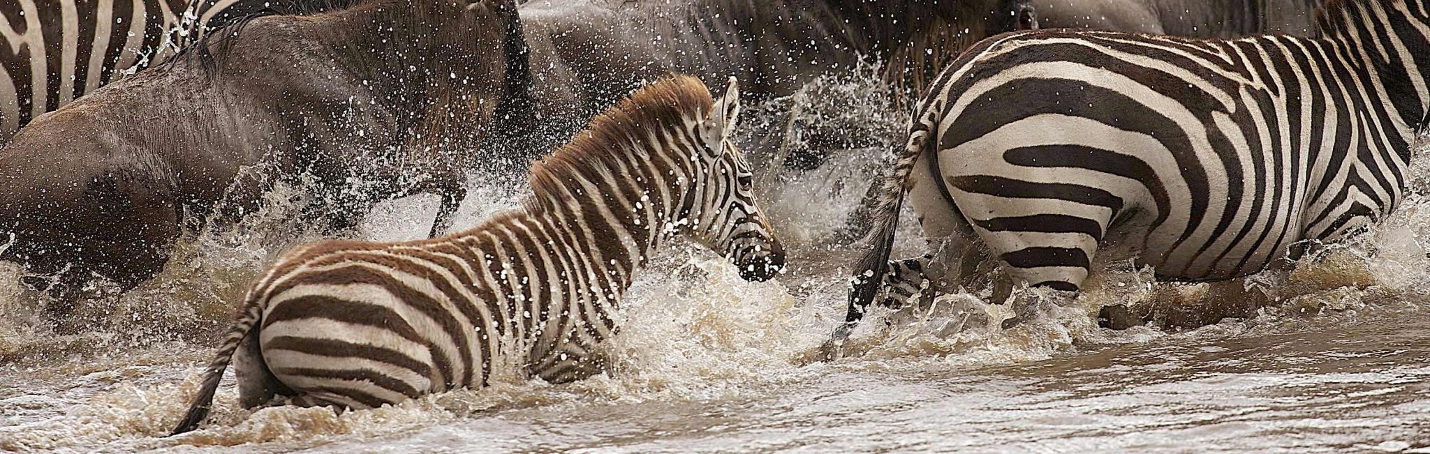 African Safari Tours | Best Safaris & Vacations 2019-2020