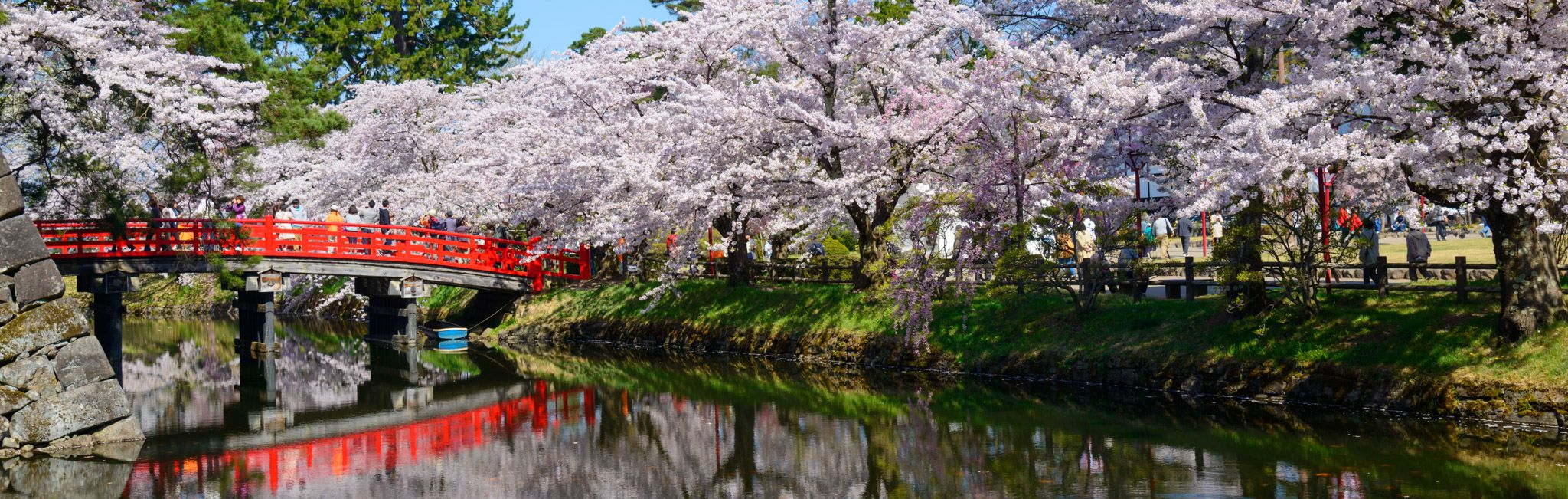 Cherry blossoms at the Hirosaki Castle Park in Japan