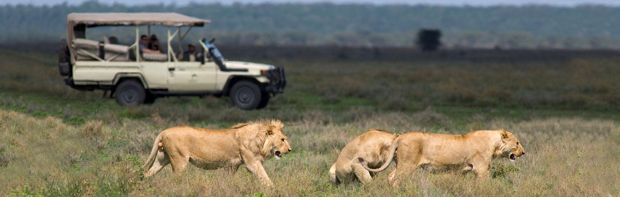 Safari Tour Guide Salary