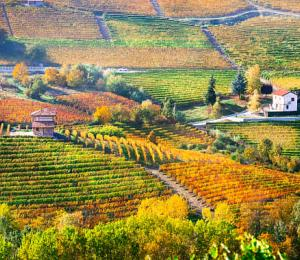 Fall in Tuscany countryside
