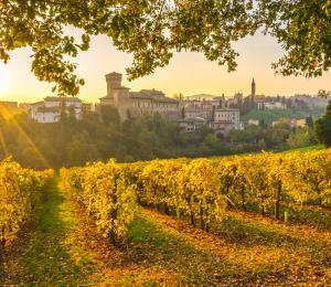 Italian Vineyard in Modena during sunrise