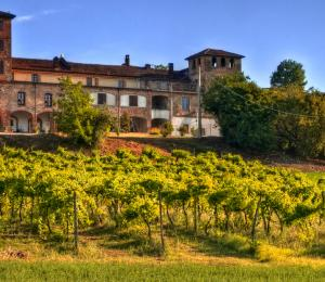 Winery building standing over its vineyard in Langhe, Piedmont, Italy
