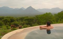 Tourist in an infinity pool enjoying the view of an elephant family grazing the land   Kenya Africa