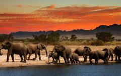 Elephants collect at a watering hole for a drink at sunset.