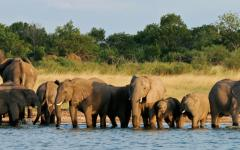 Elephants stop for a drink in Zimbabwe's Hwange National Park.
