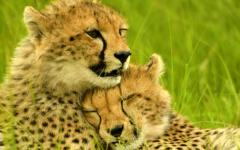 Up to 3 Top Safari Travel Agents; and Tour Operators Compete to; Plan Your Luxury Trip.