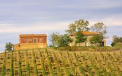 Tuscan vineyards and farm houses, Italy.