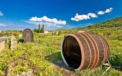 Wine barrels in a Croatian vineyard.