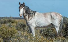 A wild horse in Argentina.