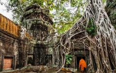 Buddhist monk entering Ta Prohm temple of Angkor Wat.