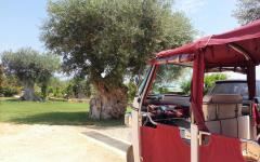 Image of Italian olive trees taken from the back of a tour vehicle  Photo Credit: Polignano Made in Love