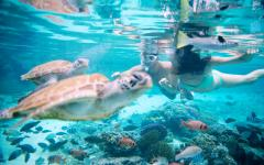 couple snorkeling in the ocean with a sea turtle