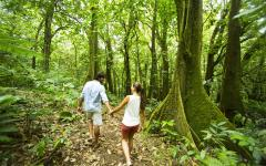 couple hiking through the jungle
