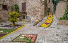 Flower art on a stone street set up during the flower festival in Spello, Italy