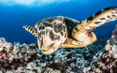 close up of sea turtle under water