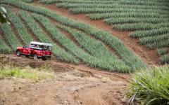 jeep ride through the jungle