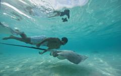 man snorkeling with manta ray in the ocean