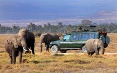 Herd of elephant walking around a safari tour vehicle | Kenya, Africa