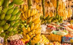 Yellow and green bananas hanging on display in a Kenyan market