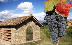 Vineyards in the Tuscan region of Chianti.