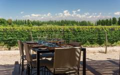 Wine tasting at a winery with view of Andes Mountains in Mendoza.