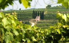 View through shrubbery of a vineyard in the Lessinia Regional Natural Park in  Verona, Italy