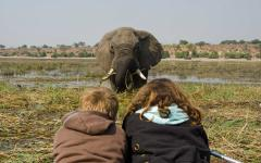 Two tourists gazing at an African elephant feeding in a swamp while the elephant stares right back at them | Chobe National Park, Botswana, Africa