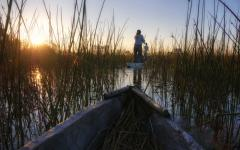 View of a mokoro canoe tour in the Okavango Delta in Botswana, Africa