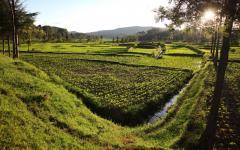 Crop lands in Rwanda, Africa