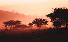 Hazy image of the Africa bush at sunset