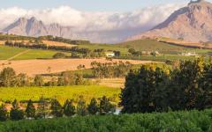 Landscape of Stellenbosch, South Africa