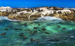 An abundance of seals at Duiker Island, Africa