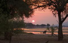 Sunset at Mana Pools National Park with elephants and impala in the foreground