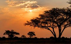 A Zimbabwe sunset creating tree silhouettes in the foreground
