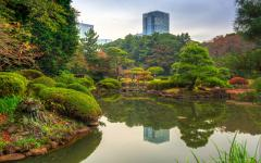 Japan Tour - Autumn leaves in Shinjuku Park, Tokyo