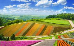 Japan Tour - Furano's Colorful Flower Fields in Summer