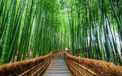 Japan Tour - Path through Arashiyama's Bamboo Forrest