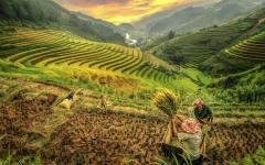 Mu Cang Chai's rice fields, Vietnam.