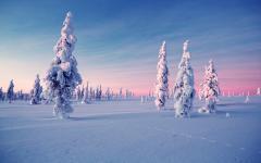 Frozen trees in Finland. Photo credit Kakslauttanen.