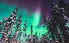 View of Northern Lights over snow-covered forest.