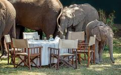 Africa_Kenya_Little_Governors_camp_Elephants