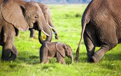 africa_kenya_tanzania_amboseli_elephants_family