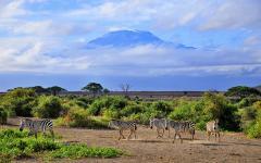 Africa_Tanzania_Mount_Kilimanjaro_Zebras