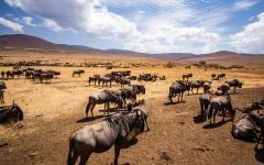Africa_Tanzania_Ngorongoro_Crater